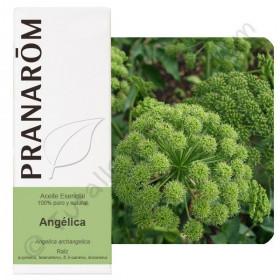 Aceite esencial de angélica 5 ml.