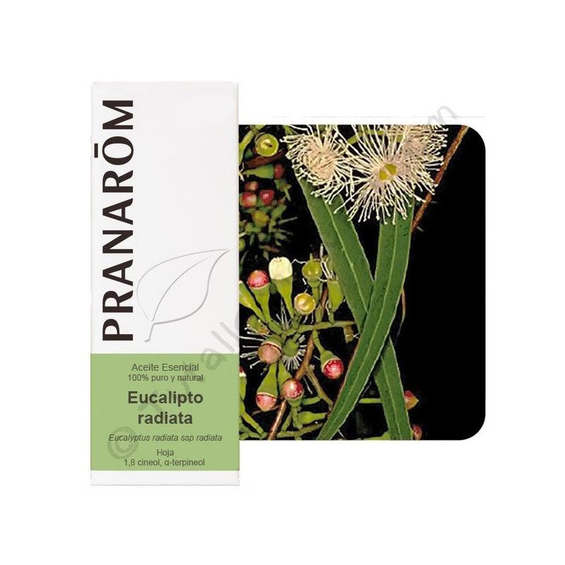 Aceite esencial de eucalipto radiata 10 ml. y 30 ml
