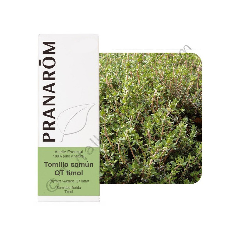 Aceite esencial de tomillo timol 10 ml.