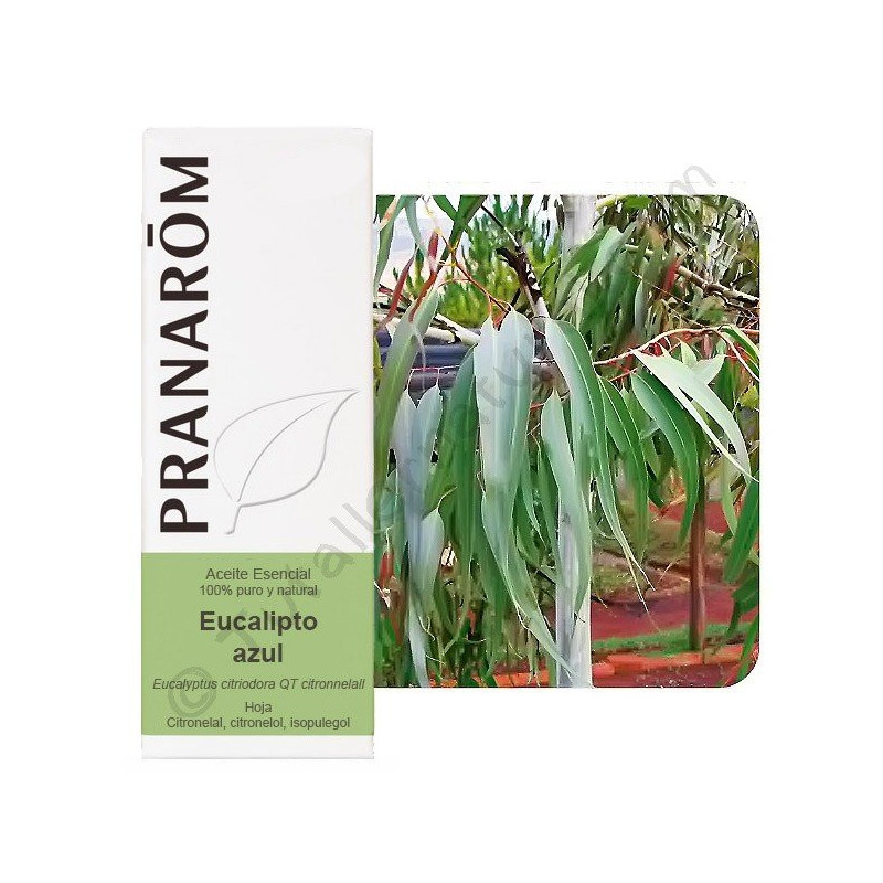 Aceite esencial de eucalipto azul o citriodora Pranarom