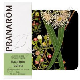 Aceite esencial de eucalipto radiata 10, 30 y 100 ml
