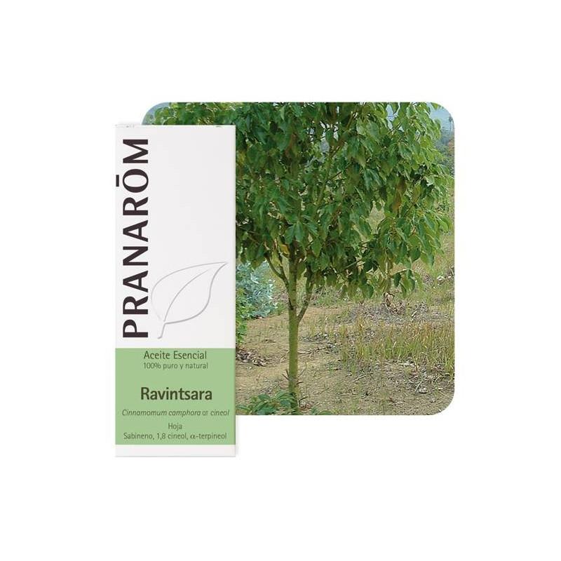 Aceite Esencial de Ravintsara 10 y 30 ml.