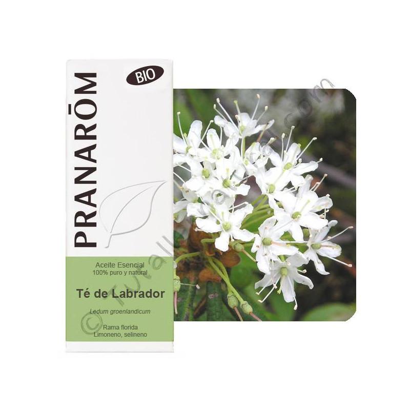 Aceite esencial de té de labrador BIO 5 ml.