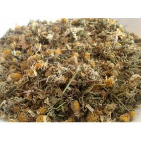 Flores de margarita de los prados (Bellis perennis)